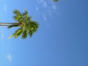 ヤシと青い空