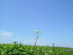 野に咲く一輪の花
